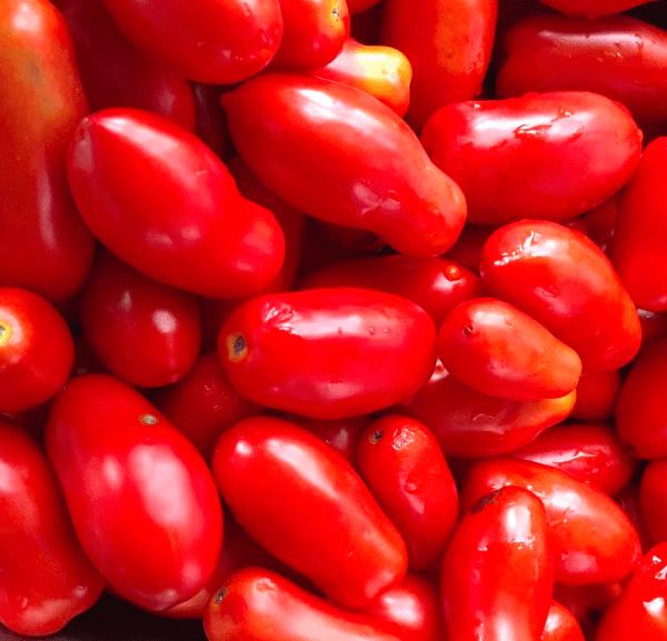 riproduzione semi di pomodoro